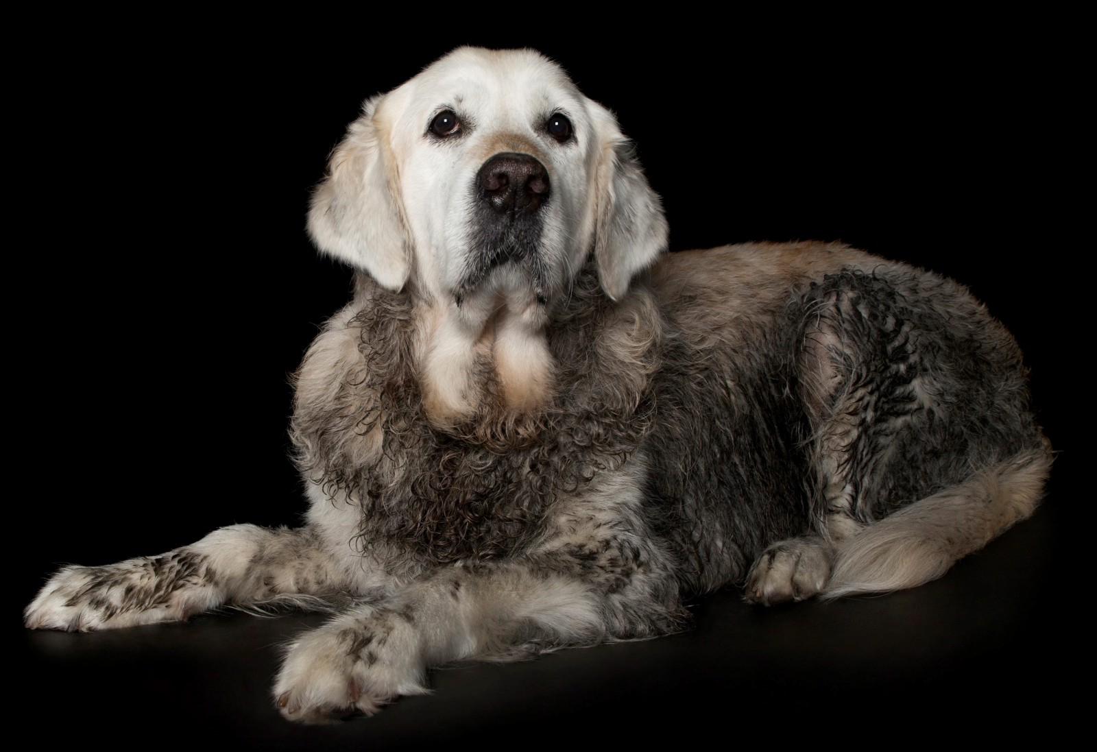 Muddy moment captured forever after dog spoils owner's photoshoot!