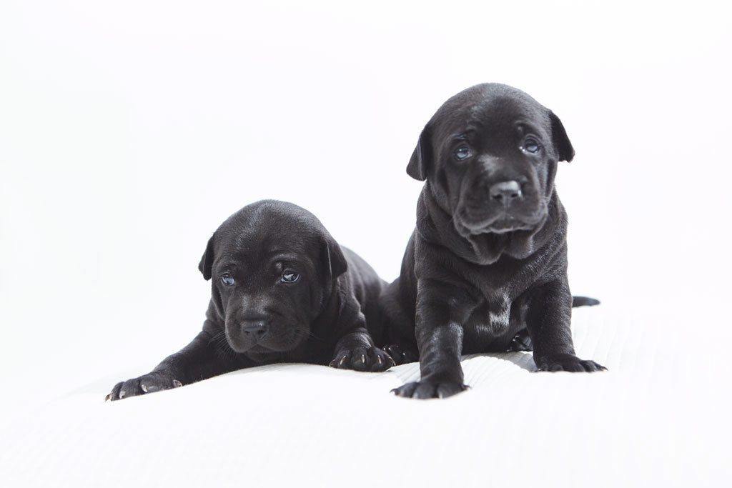 Adorable litter of rare puppies are attracting offers of 10k EACH!