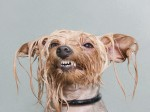 Hilarious photos capture disgruntled dogs at bath time!