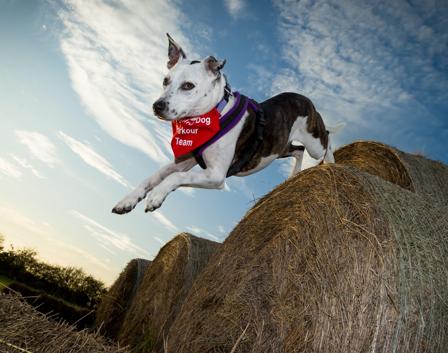 We bet your thrill-seeking dogs would LOVE to do this!