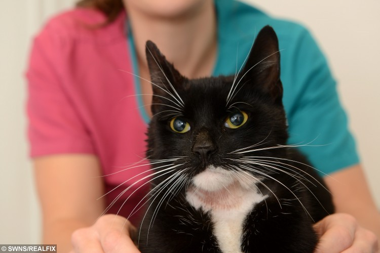Pictured: Nurse Debbie Evans with Felix the cat who got his head stuck in a can of Whiskers cat food.  See NATIONAL copy NNCAT for full story.
