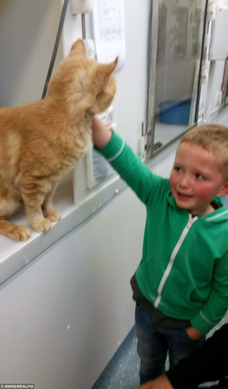 Collect picture of Phoenix with Ronnie, 5 at the adoption centre when they found him.  See NTI story NTCAT.  This is the heart-melting moment a five-year-old boy bursts into tears of joy when he spots his long-lost cat in a rescue centre - 18 months after it went missing. Michelle Humber and her son Ronnie had gone to pick out a replacement pet when they stumbled across their old cat Phoenix who vanished from their home in May last year.  In an incredible coincidence, ten-year-old Phoenix was in an enclosure next to a cat called Orlando who they had arranged to collect from their local Cats Protection charity.  The family now plan to give both cats a home when they pick them up this weekend.