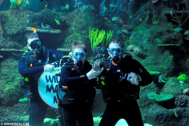 """Picture of the underwater wedding proposal by Steven Purdiew to girlfriend Rebecca May Cressey at the Skegness Aquarium in Lincs. See Ross Parry copy RPYAQUA : A man took the plunge and proposed to his girlfriend while they were swimming with sharks. Rebecca May Cressey thought they were just going diving for her birthday, but Steven Purdiew had enlisted Skegness Aquarium staff to help him propose. Miss Cressey saw a board asking """"Will you marry me?"""" then put her thumbs up to say she would. The couple, from Somercotes in Derbyshire, now plan to get married in a year or two."""