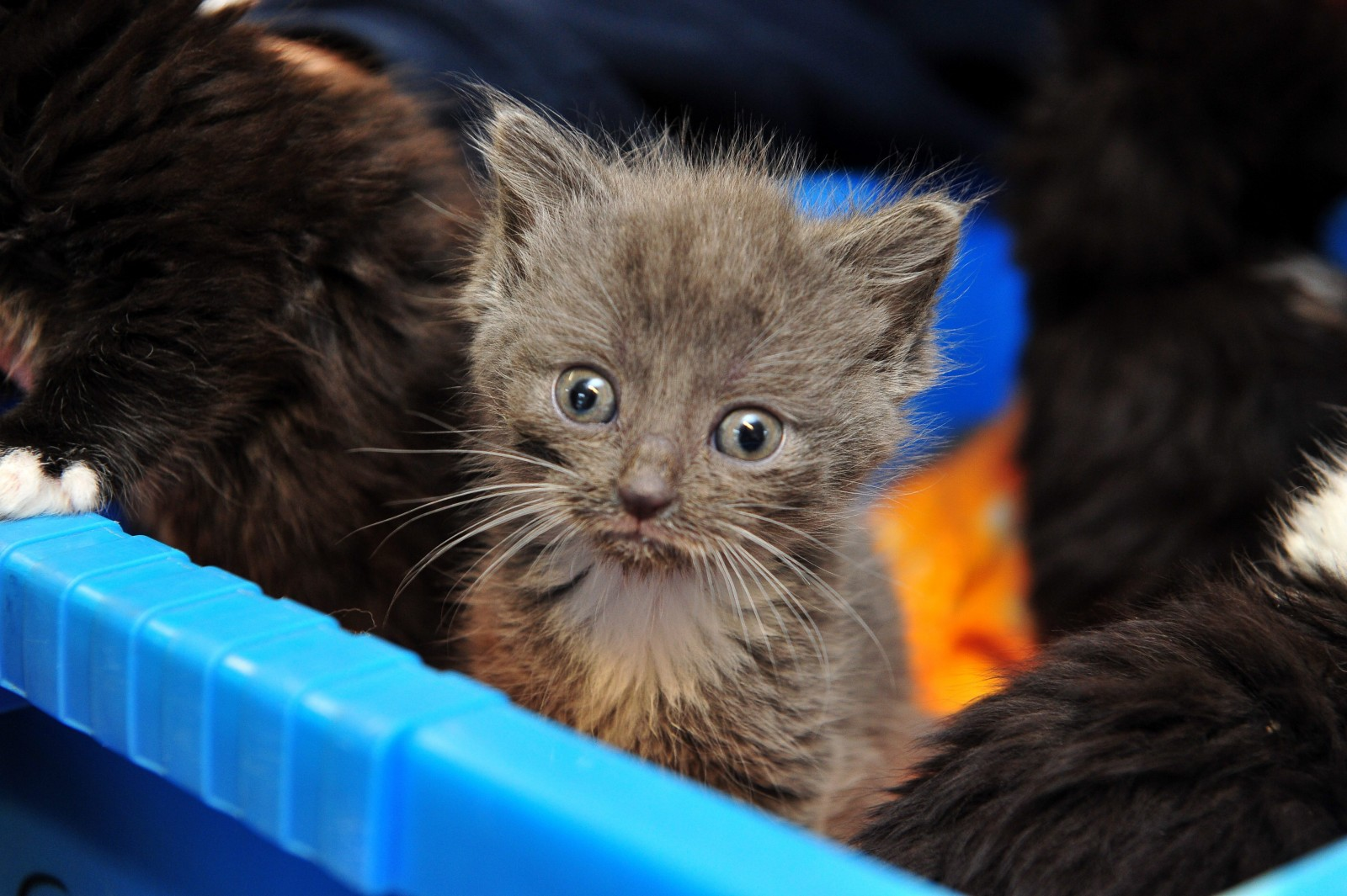 'There is no excuse for this' Terrified newborn kittens cruelly dumped on doorstep