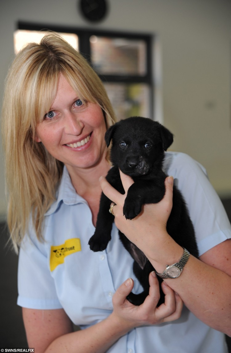 Winnie the puppy who has been dumped because of her facial disfigurement is being looked after at the Basildon Dogs Trust with receptionist Sarah Rowe. See Ross Parry copy RPYBEAR : How could anyone BEAR to give up this adorable pup - whose owners wanted SNOUT to do with her. The gorgeous puppy was dumped in a box and abandoned in her local park when she was only a few weeks old. Cold, shivering and left to fend for herself, thankfully a passer-by found her and took her to the Dog's Trust at the beginning of October. Staff there fell in love with her - and noticed the unusual marking on her snout makes her look like a BEAR CUB. They named her Winnie - after the famous A.A. Milnes character - and nursed her back to health with all the bare necessities she needed.