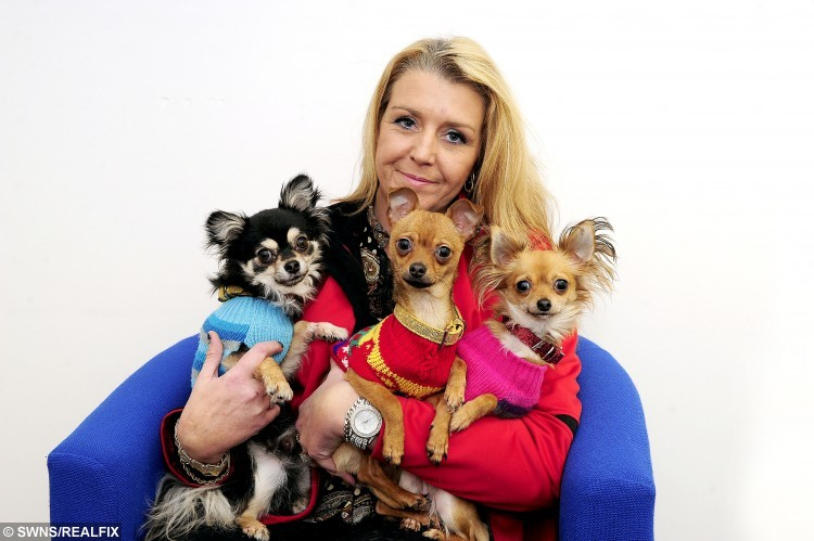 """Victoria Black from Hallglen, Falkirk, has been reunited with her three stolen chihuahuas (L to R) Prince, Coco and Princess after paying a ransom of £500. See Centre press story CPRANSOM; A dog owner was forced to pay a £500 RANSOM for the safe return of her abducted Chihuahuas, fearing she might never see them again. Victoria Black has been reunited with her three beloved pets after they were snatched from her home during a break-in over the weekend. She had reported the matter to the police and offered a reward for any information which would help track down the whereabouts of her """"babies"""". But the dog nappers contacted her by phone, demanding she pay them the cash on the spot during the early hours of Wednesday. Victoria was given a 15-minute deadline and was asked to deposit £500 ransom cash at a bus stop near her house in Hallglen, Falkirk."""