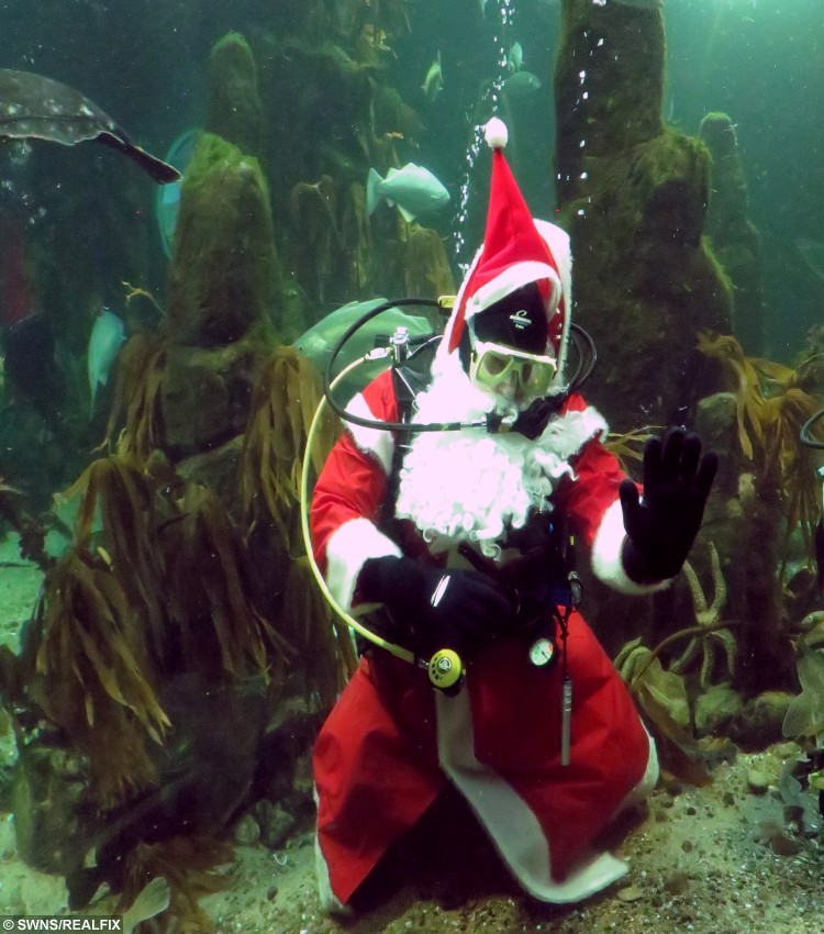 "Santa takes a dive at the Macduff Marine Aquarium, Banffshire. See Centre press story CPSANTA; Santa Claus made an unusual surprise visit yesterday (Thurs) -- by taking a dive in a cold fish tank. Swimming underwater in a red suit and scuba gear, he also took the opportunity to entertain visiting children at Macduff Marine Aquarium, Banffshire. The attraction, which features local marine life, keeps its tanks at the same temperature as the sea outside, currently 9 degrees Celsius. Sandra Bisset, aquarium learning officer at Aberdeenshire Council said: ""Many warm water animals could not survive in these temperatures, but I think Santa is just as comfortable in the cold water as he is in snow."""