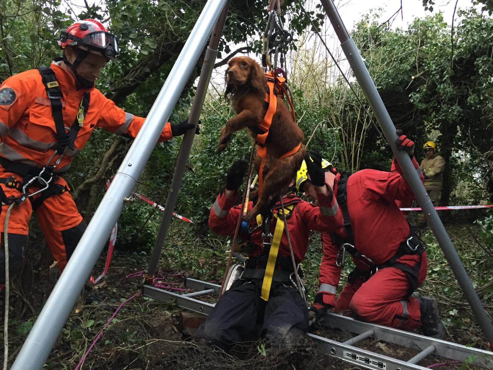 Cocker Spaniel Lilly had lucky escape after falling 30ft – down a well