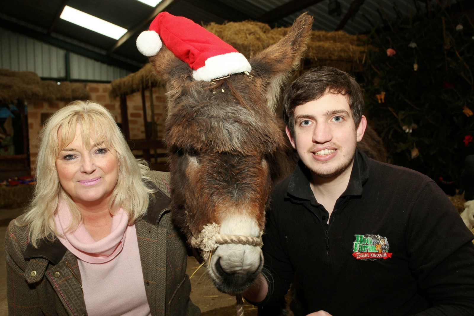 Donkey has a festive fiasco after eating Christmas decorations