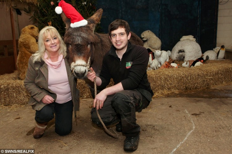 Carolyn Dorrell, with Whisper the donkey and manager Will Dorrell, from Hoo Farm, Preston on the Weald Moors.  A donkey who narrowly avoided a festive fiasco is in a stable condition - after EATING Christmas decorations.  See NTI story NTIDONKEY.  Whisper the donkey luckily didn't suffer any serious injuries after the seasonal light snack.  Staff at tourist attraction Hoo Farm, in Telford, Shrops., faced pulling the plug on their annual Step Into Christmas show after Whisper munched his way through Christmas tree lights.  Just hours before the event last Saturday (5/12) - which is in its 24th year - workers at the petting farm found frayed cable, missing fairy lights, and baubles which had been chewed.  However, the evening, which included mince pies and music, went ahead after new supplies were hurriedly purchased.  And Whisper redeemed himself following the fiasco with a flawless performance as the star of the show in the Nativity play.