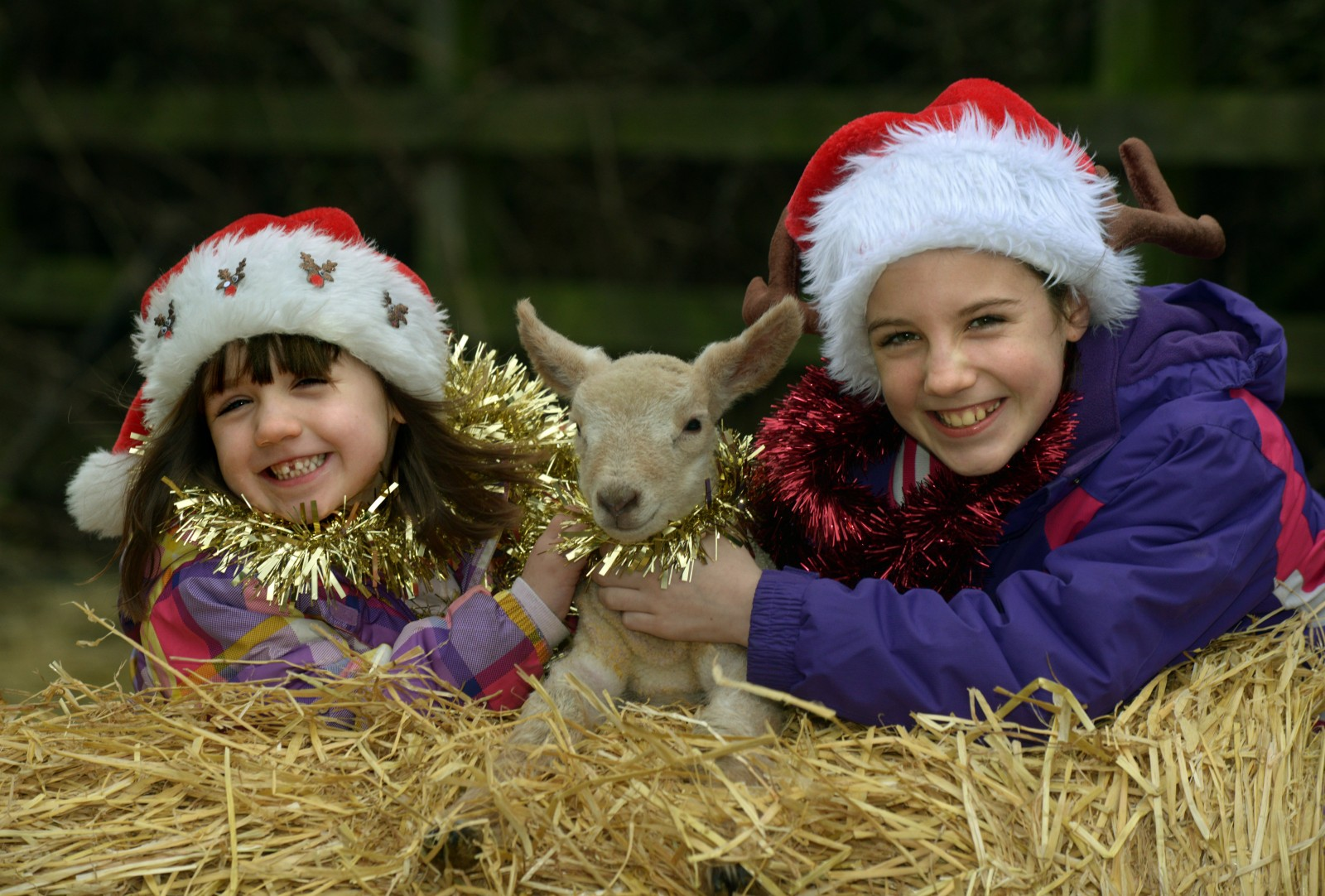 Rudolph the lamb has made two sisters very happy this Christmas!