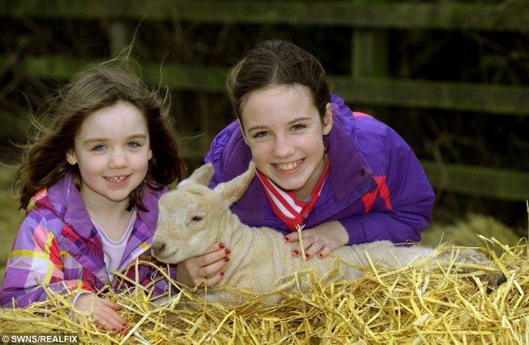 """Lucy 4 and Molly 10 from Kirby Misperton in North Yorkshire, celebrating Christmas with Rudolph a 3 day old lamb. See Ross Parry copy RPYLAMB: Rudolph the lovely lamb made the perfect Christmas gift for a couple of young sisters when he was born on Sunday. The woolly wonder was given his festive name by Molly and Lucy Dougherty, four, when he came into the world in the stables on their family's small holding. Speaking about the newest member of their flock, Molly, ten, said: """"He's quite timid really and sort of in the middle size wise, bigger than some and smaller than others."""