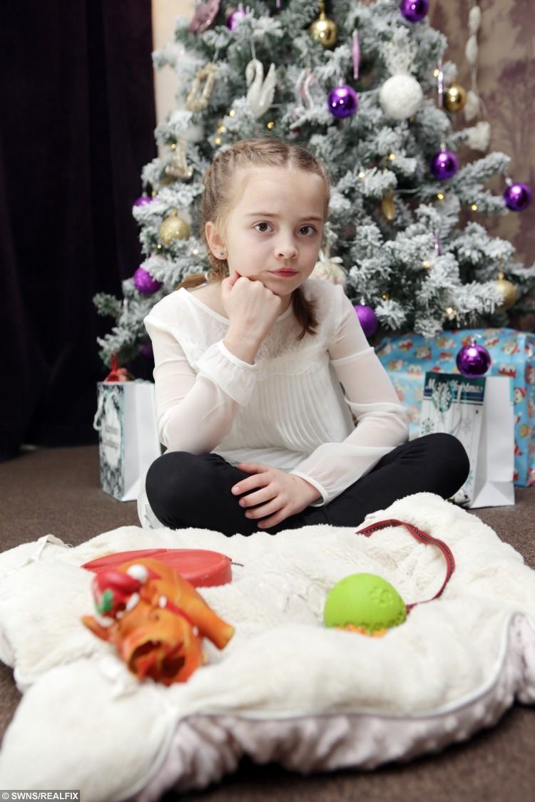 """Isla Kerr, 7, writes a letter to Santa Claus asking him to find her lost dog Dolly. See Ross Parry Copy RPYLETTER: A heartbroken little girl has written a touching letter to Santa asking for him to bring her beloved pet dog home after she was stolen by cruel thieves. Devastated Isla Kerr, seven, put pen to paper after telling mum Vanessa Meskimmon, 'Santa can do anything', pleading for Boston terrier Dolly to be brought back safely. The three-year-old dog is blind and requires daily medication, and the family say she will be terrified not knowing where she is. Isla's handwritten note reads: """"Dear Santa, All I want for Christmas is my dog to come back."""""""