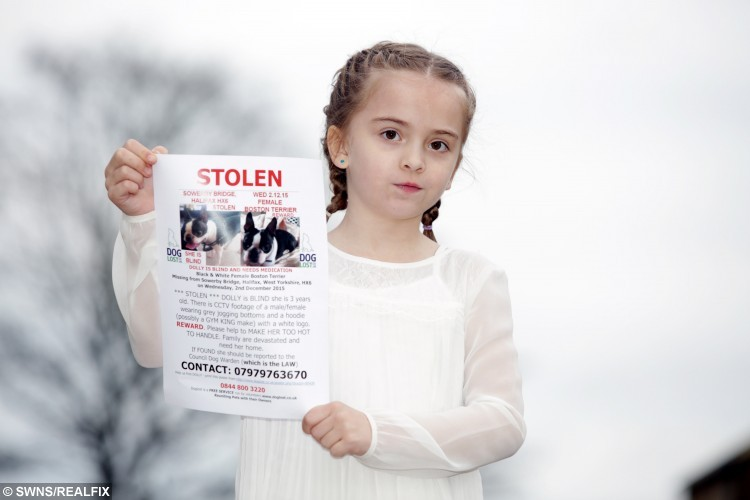 """Isla Kerr, 7, with a wanted poster for her lost dog Dolly. See Ross Parry Copy RPYLETTER: A heartbroken little girl has written a touching letter to Santa asking for him to bring her beloved pet dog home after she was stolen by cruel thieves. Devastated Isla Kerr, seven, put pen to paper after telling mum Vanessa Meskimmon, 'Santa can do anything', pleading for Boston terrier Dolly to be brought back safely. The three-year-old dog is blind and requires daily medication, and the family say she will be terrified not knowing where she is. Isla's handwritten note reads: """"Dear Santa, All I want for Christmas is my dog to come back."""""""