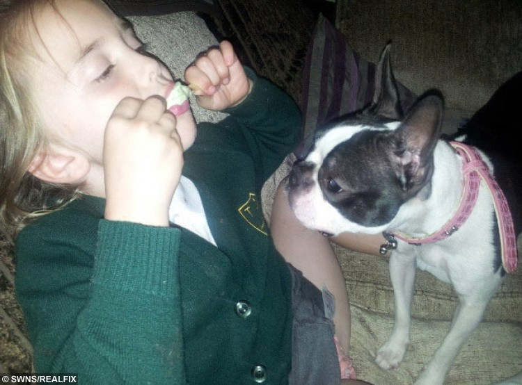 """Isla Kerr, 7, in old photos with her lost dog Dolly. See Ross Parry Copy RPYLETTER: A heartbroken little girl has written a touching letter to Santa asking for him to bring her beloved pet dog home after she was stolen by cruel thieves. Devastated Isla Kerr, seven, put pen to paper after telling mum Vanessa Meskimmon, 'Santa can do anything', pleading for Boston terrier Dolly to be brought back safely. The three-year-old dog is blind and requires daily medication, and the family say she will be terrified not knowing where she is. Isla's handwritten note reads: """"Dear Santa, All I want for Christmas is my dog to come back."""""""