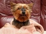 Britain's oldest dog still gets mistaken for a puppy