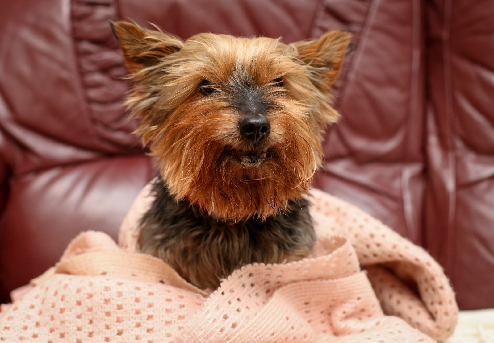 Britain's oldest dog still gets mistaken for a puppy
