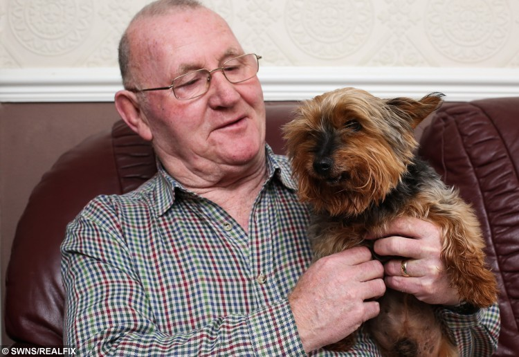 Jack the 26 year old Yorkshire Terrierwith owner Ray Bunn. December 16 2015. See Ross Parry Copy RPYDOG A Yorkshire Terrier turns 26 today (Weds) and becomes Britain's oldest dog - but still gets mistaken for a PUPPY. Sprightly Jack has arthritis and can only walk short distances - but his owners say people often think he's much younger. They say he's so happy and full of energy everyone assumes the OAP pooch is a puppy.