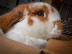 You really don't want to mess with this blood-thirsty bunny