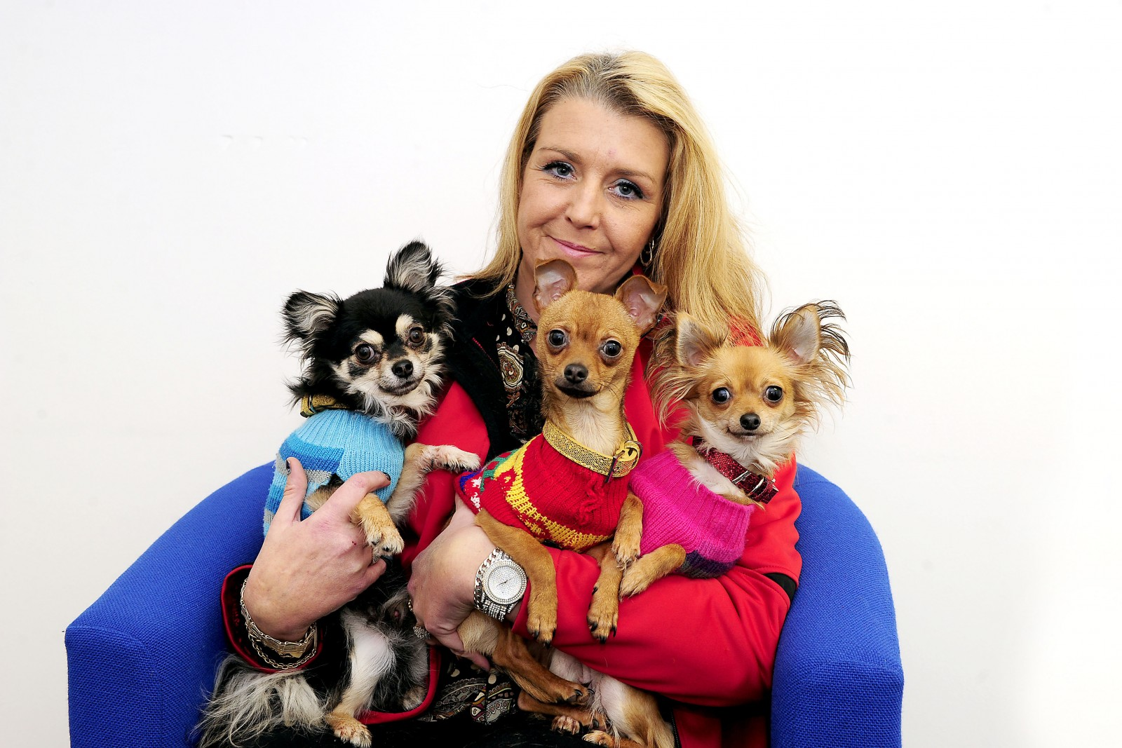 Owner forced to pay a RANSOM for the safe return of her abducted Chihuahuas
