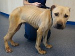Neglected dog horrifically injured after being dragged along by a car