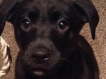 Owner pleads for the save return of vulnerable stolen puppy