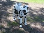 Star Wars fan creates the world's best dog costume!