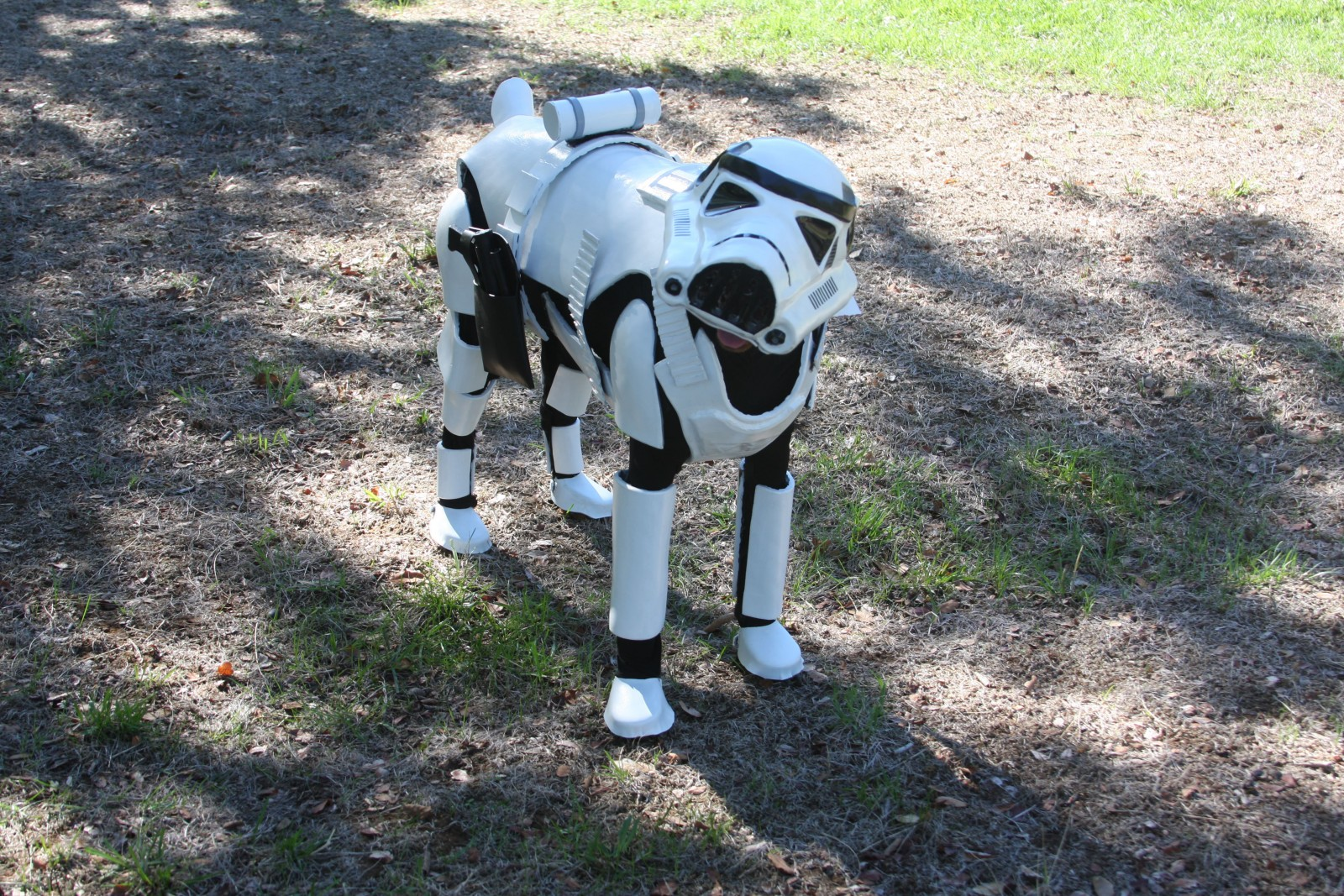 Star Wars fan creates the world's best dog costume!