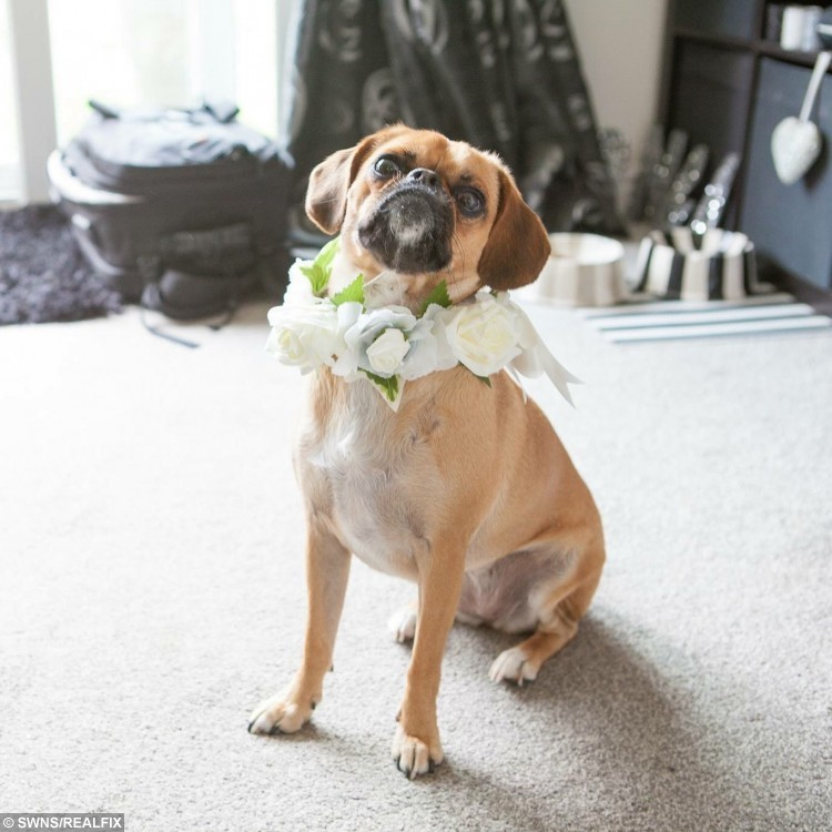 dog knot girl