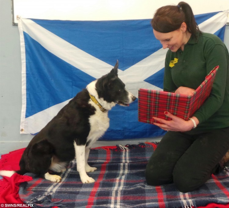 Shy collie dog Maddie with her carer Julie Allan. See Centre Press story CPBURNS; Helpers at a Scots dog home are reciting classic Burns Poems in a bid to build a shy pooch's confidence around people. Ten-year-old Collie Maddie has been at a rehoming centre for nearly a year and can get worried by being in unfamiliar settings and meeting new faces. The dog finds it hard to trust people, but staff at the Dogs Trust in Glasgow are getting her used to human interaction by reading the Bard's most popular poems. Helpers revealed Maddie particularly enjoys listening to the Burns classics 'A Winter Night' and 'Ode to Spring'.