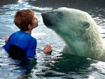 Animal lovers get a unique opportunity to swim with polar bears
