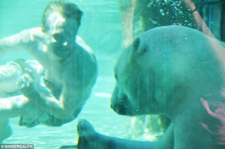 the polar bear the giants of canada Happy international polar bear daythe polar bear conservation group polar bears international, has set aside feb 27 as a special day to celebrate those furry white giants of the north, and to.