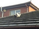 You'll never guess how this bunny ended up on the roof