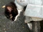 Hungry homeless kitten gets her head stuck in a bin
