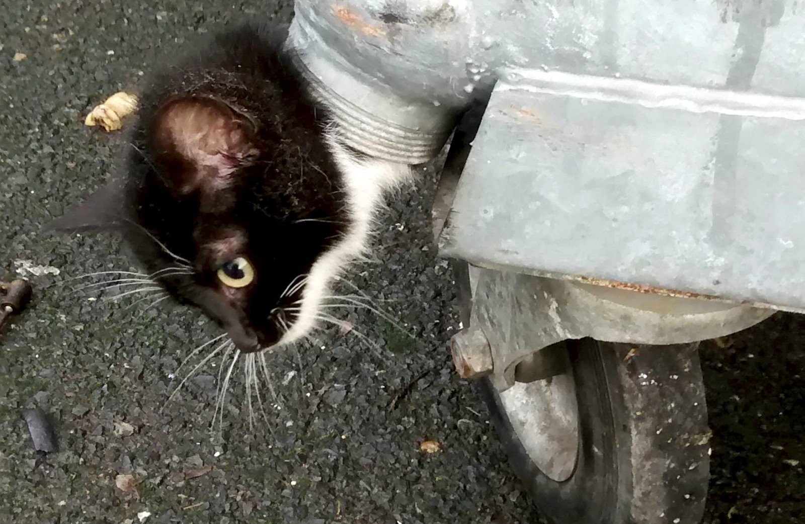 Hungry homeless kitten gets her head stuck in a bin