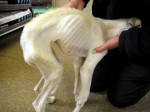 Thinnest dog RSPCA inspector had ever seen is loved back to life