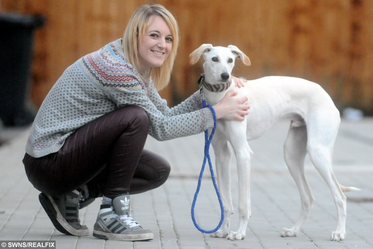 William, a greyhound-saluki with new owner Rachel Butler. See News Team copy NTIDOG: A puppy who was described as the thinnest dog an RSPCA inspector has ever seen is on the road to recovery after being rehomed by a loving family. Just four months ago, shocking photos of William, a greyhound-saluki cross, hit the headlines after he was handed into an RSPCA branch in Coventry, West Mids., in a severely emaciated state. When he was found, he weighed just 3kg - the same as a small cat - and was close to death. The then-six-month-old puppy could not stand up and was classed as severely emaciated to the point of starvation. But now William has made a remarkable recovery and and has been adopted by Rachel Butler and Chris Mallett, from Castle Ward, Derby.