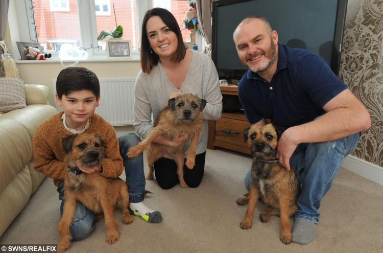 Charlie Draycott & Woody, Hannah Denton & Bertie, Mark Draycott & Ginny.  The family of a dog who disappeared almost a year ago have urged owners of missing pets not to give up hope – after being reunited with their beloved pet pooch.  See NTI story NTIDOG.  Hannah Denton, Mark Draycott and their son Charlie, 9, from Shobnall, made the impassioned plea after welcoming home the their border terrier Ginny on New Year's Day after thinking they had lost her forever.  The family also thanked the public for their help after a campaign to track her down spread across the entire country.
