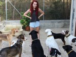 Student's campaign inspires celebrities to adopt neglected Cyprus rescue dogs