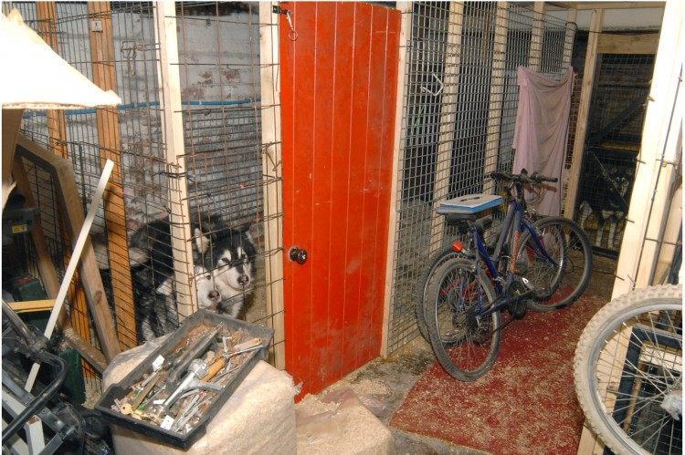 RSPCA released picture of the squalid conditions that animals were found at Armley Vets in Leeds, West Yorkshire. See Ross Parry Copy RPYVET : A vet and his assistant have been found guilty of neglect after police found 12 husky dogs 'living in squalor' under a trap door in the cellar of the surgery. Gary James Cassius Samuel, 49, and Rochelle McEwan, 28, worked at Armley Vets, in Leeds, West Yorks. The court heard that at the time of the incident Samuel and McEwan were long term partners and lived above the practice. On Tuesday, February 24, police were called to the property after a 999 call reported that Samuel was threatening McEwan with a hammer.