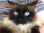 Has the notorious Croydon Cat Killer struck again?