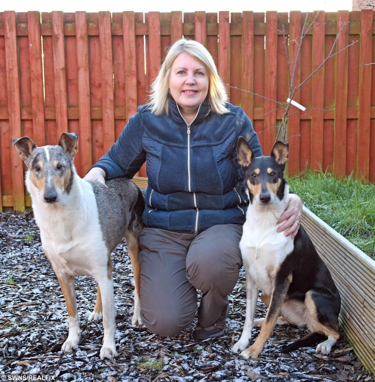 "Cath Pryde with her smooth haired collies Maya and Flinty, Maya punctured her tongue with a stick. See SWNS story SWSTICK; Vets have urged dog owners to stop throwing STICKS for their pets because it is too dangerous. The warning from a senior vet came after one dog suffered horrific injuries during the seemingly harmless activity. Maya a smooth-haired collie punctured her tongue and displaced her voicebox when a four-inch splinter from a stick became stuck deep in her throat. Grace Webster, president of the British Veterinary Association in Scotland, said: ""Most owners and dogs think throwing a stick is great fun. ""But so many injuries could be avoided by throwing safe alternatives like rubber sticks from pet shops, balls or Frisbees instead."