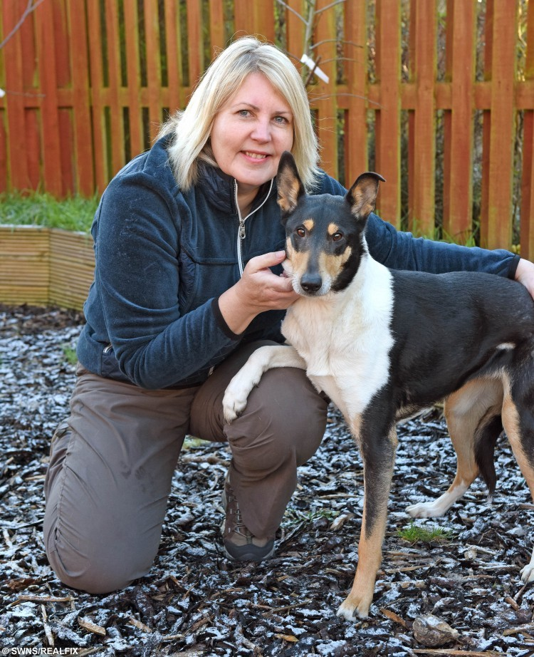 "Cath Pryde with her smooth haired collie Maya who punctured her tongue with a stick. See SWNS story SWSTICK; Vets have urged dog owners to stop throwing STICKS for their pets because it is too dangerous. The warning from a senior vet came after one dog suffered horrific injuries during the seemingly harmless activity. Maya a smooth-haired collie punctured her tongue and displaced her voicebox when a four-inch splinter from a stick became stuck deep in her throat. Grace Webster, president of the British Veterinary Association in Scotland, said: ""Most owners and dogs think throwing a stick is great fun. ""But so many injuries could be avoided by throwing safe alternatives like rubber sticks from pet shops, balls or Frisbees instead."