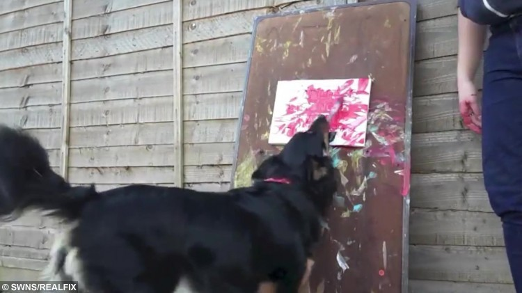 Video grab of Ruby the talented dog who has learnt how to skate and paint paintings. See SWNS story SWPAINT; A talented dog has shown off her impressive skills - by painting stunning pictures to raise money. Five-year-old cross breed Ruby has learnt how to skate, dance and paint paintings with the help of her owner Megan Taylor, 19, who suffers from up to six fainting episodes a day. After suffering her fractured skull in 2011, Megan suffers from dizziness, poor balance, hearing loss and frequent fainting episodes which occur up to six times a day. When she comes round, best friend Ruby is there to comfort and help her get back on her feet - and she was even honoured with a PDSA commendation for her dedication to Megan.