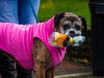 'Womble' dog collects rubbish on her walks then recycles it!