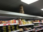 Grumpy cat sneaks into supermarket and glares at shoppers