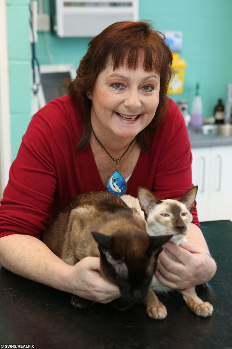 """Kath O'Regan whose life was saved - by a visit to the vet. See SWNS story SWVET; A visit to the vet saved the life of cat-owner Kath O'Regan. The 50-year-old from Swindon Village had been suffering severe stomach pain for five years when she took her two Siamese cats Shammy and Georgie to Folly Gardens Veterinary Clinic in Cleeve. """"I was batting my head against a brick wall,"""" said Kath. """"I didn't know what was wrong with me. I thought maybe I had caught something from my cats."""" As vet Brad Cooper, 41, was inspecting the cats during a check-up, Kath casually explained her symptoms. He added: """"I'd read that the symptoms can be associated with things like ovarian cancer. Without trying to be alarmist I suggested Kath ask her doctor for a scan."""