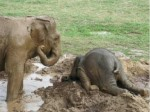 Long day? These animals TOTALLY know how you feel