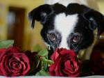 Love is in the h-air for adorable hound who sports a heart-shaped marking