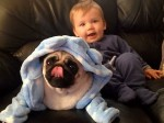 One-year-old is living the Pug Life thanks to Instagram fame